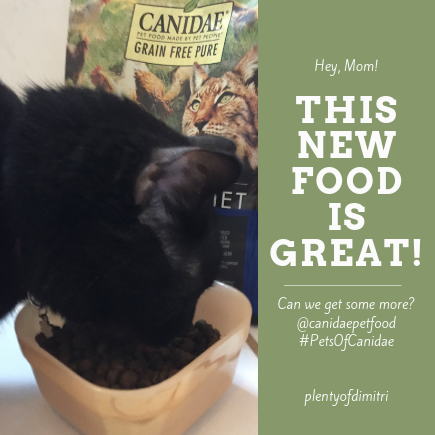 Dimitris Opinion of Food, Canidae, grain free pure ancestral formula, cat food, #PetsOfCanidae, @canidaepetfood, plentyofdimitri